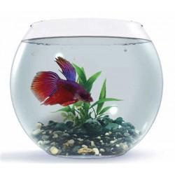 Комплект 2л аквариум шар с петушком